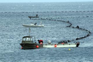 Posa di un cavo sottomarino per Terna