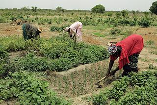Donne impegnate in attività agricole